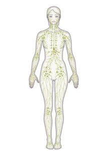 美肌と美脚に7大リンパデトックス